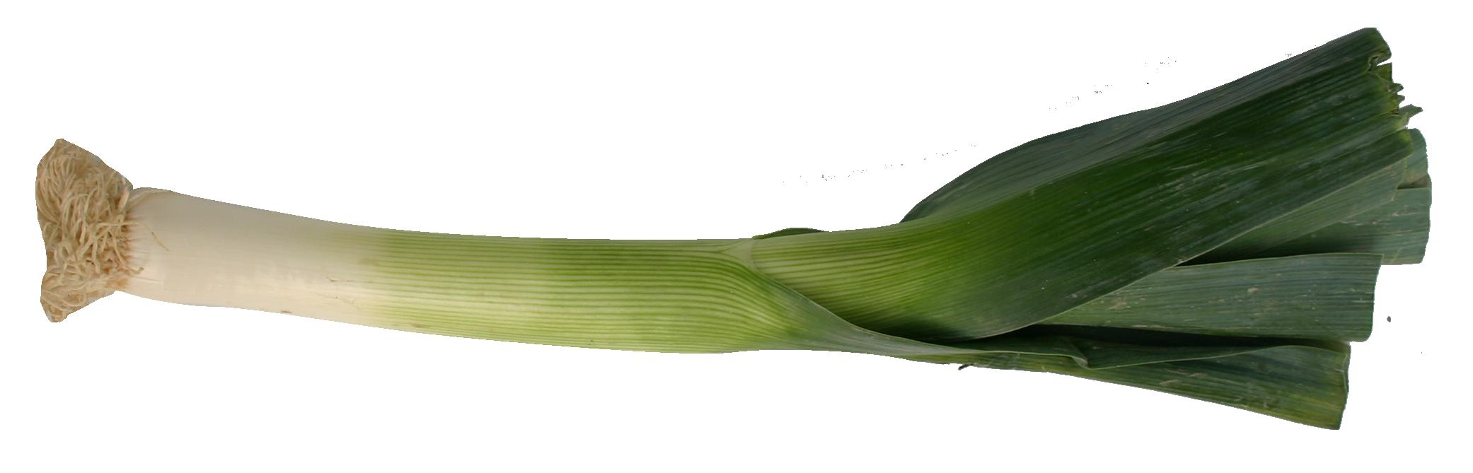 puerro - Provegano
